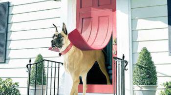 Best Dog Door For Great Danes