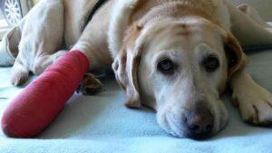 Can I Use Bactine On My Dog